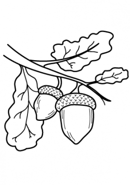 Acorn nature coloring page for kids, printable free