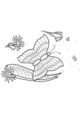 Butterfly Summer coloring pages for kids, free, printable