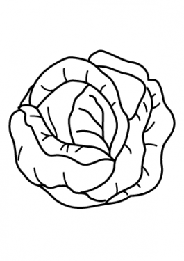 Cabbage vegetable coloring page for kids, printable
